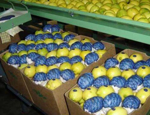 El citrus argentino aún espera un dictamen de la Unión Europea