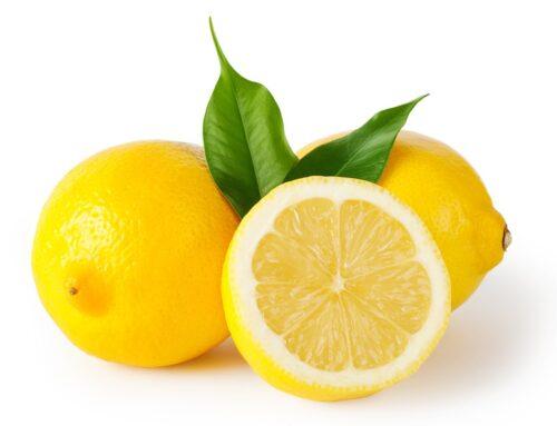 Investigadores mexicanos desarrollan nuevas variedades de limón