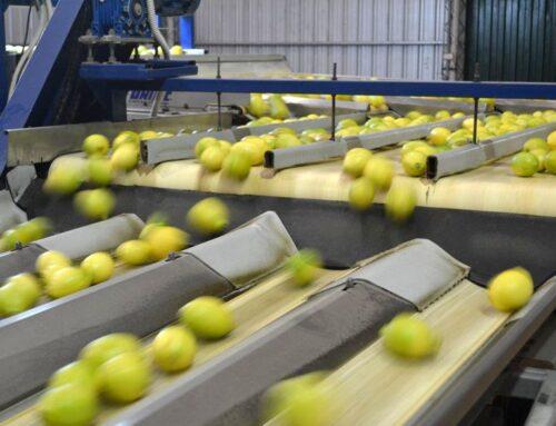 Una protesta salarial paraliza la cosecha de limones en Tucumán