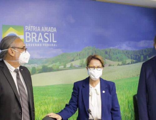 Brasil facilita el ingreso de uvas argentinas