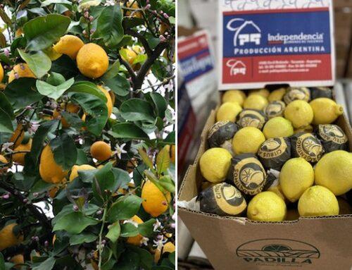 La demanda de limones aumenta en Norteamérica gracias a la reapertura de la hostelería