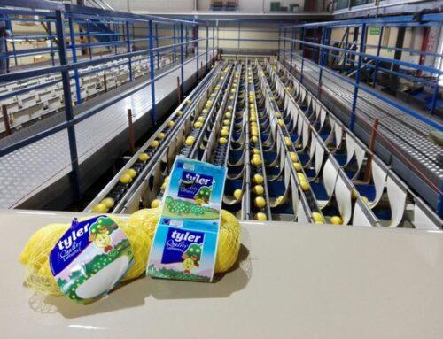 La caída de ventas en horeca y el exceso de calibre han complicado la campaña de limón Verna